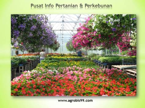 pusat-info-pertanian-perkebunan-1